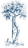 Orthopädie Baum